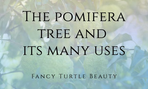 The pomifera tree and its many uses